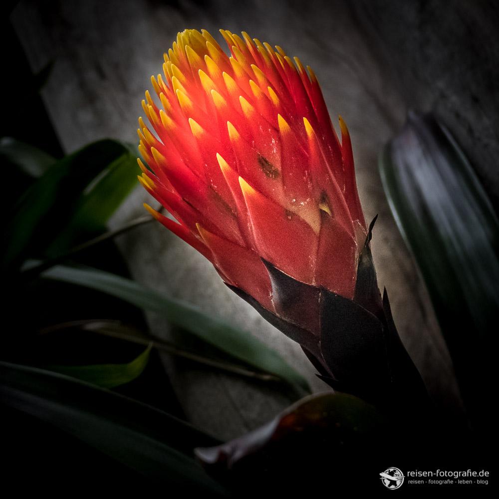 Exotische Pflanze im Gondwanaland