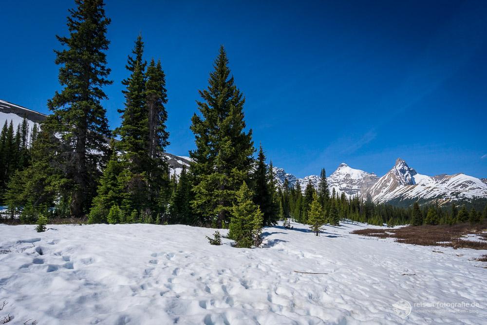 Schnee im Banff
