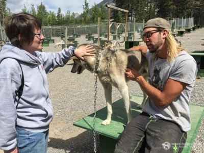 Alles was man über Huskies wissen muss