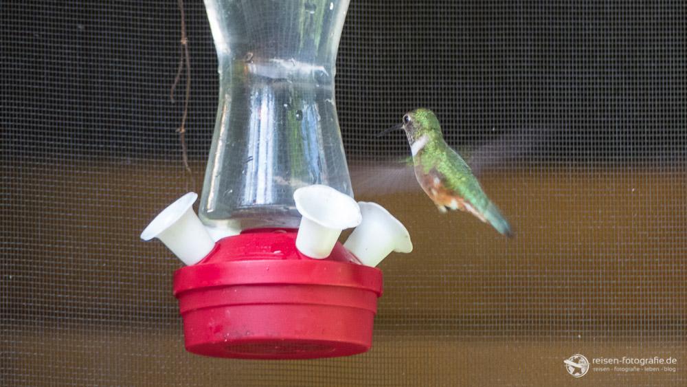Kolibri auf dem Campground