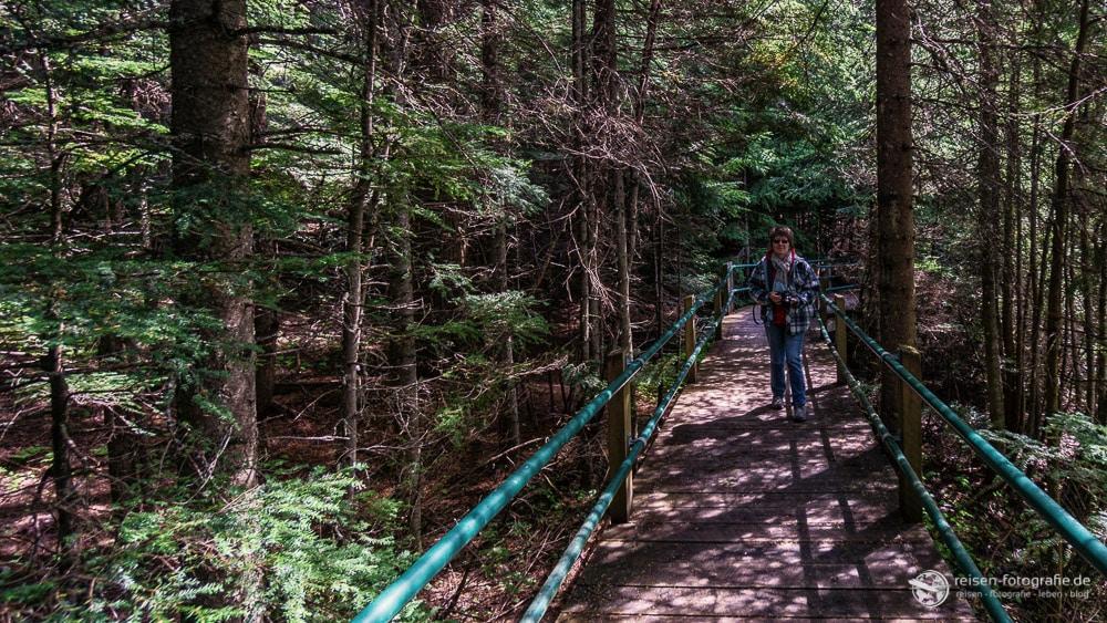 Trail durch den Regenwald