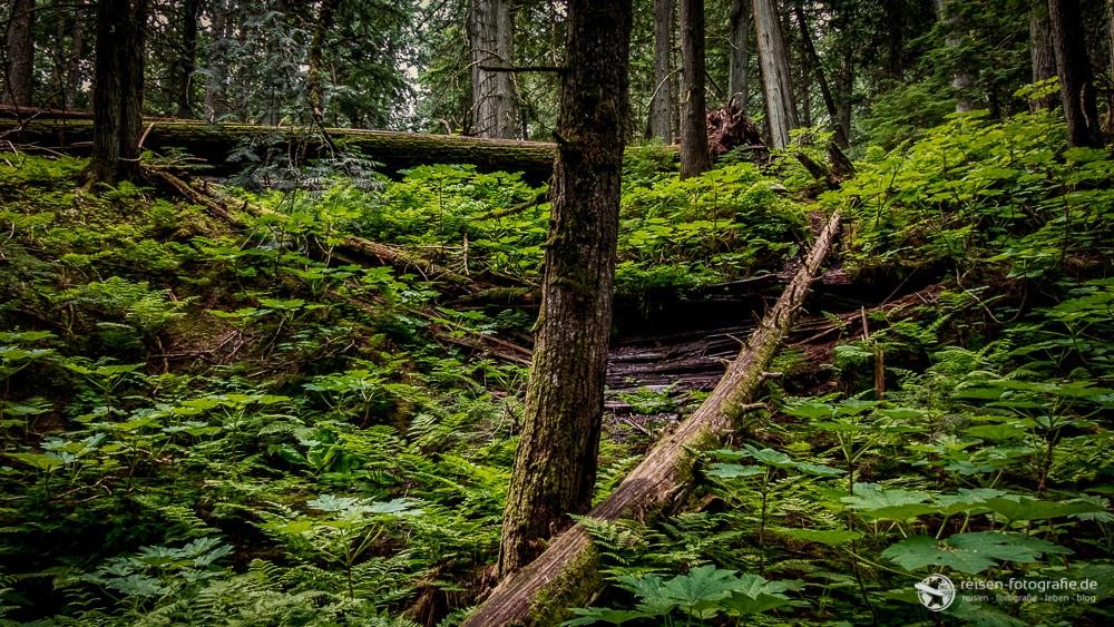 Regenwald in British Columbia