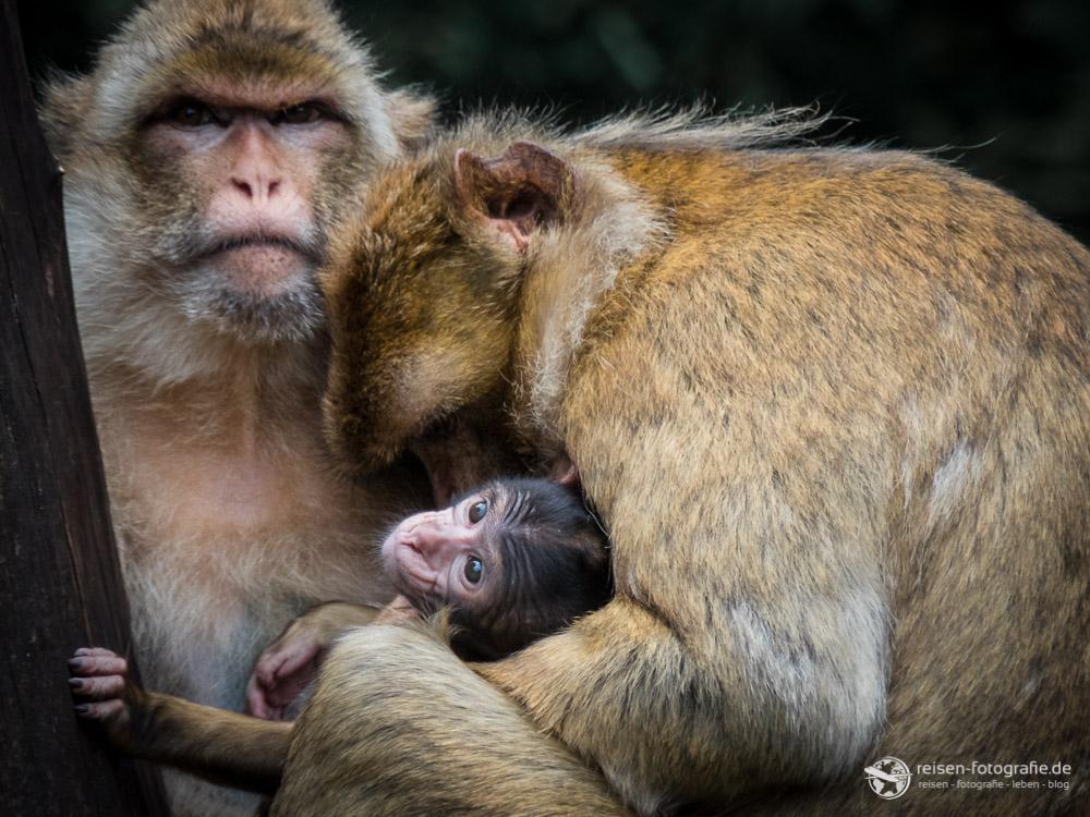 Familienglück im Serengeti Park