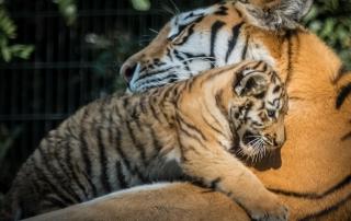 Kuscheln mit Mama