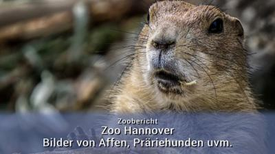 Zoo Hannover 2018
