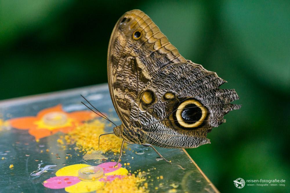 Schmetterling - Brennweite 123mm - f4 - 1/500 sec - ISO 400