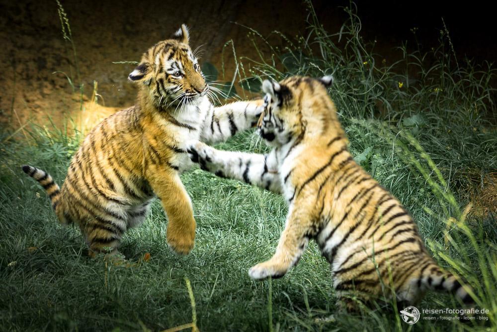 Attacke - Arila und Makar beim spielen