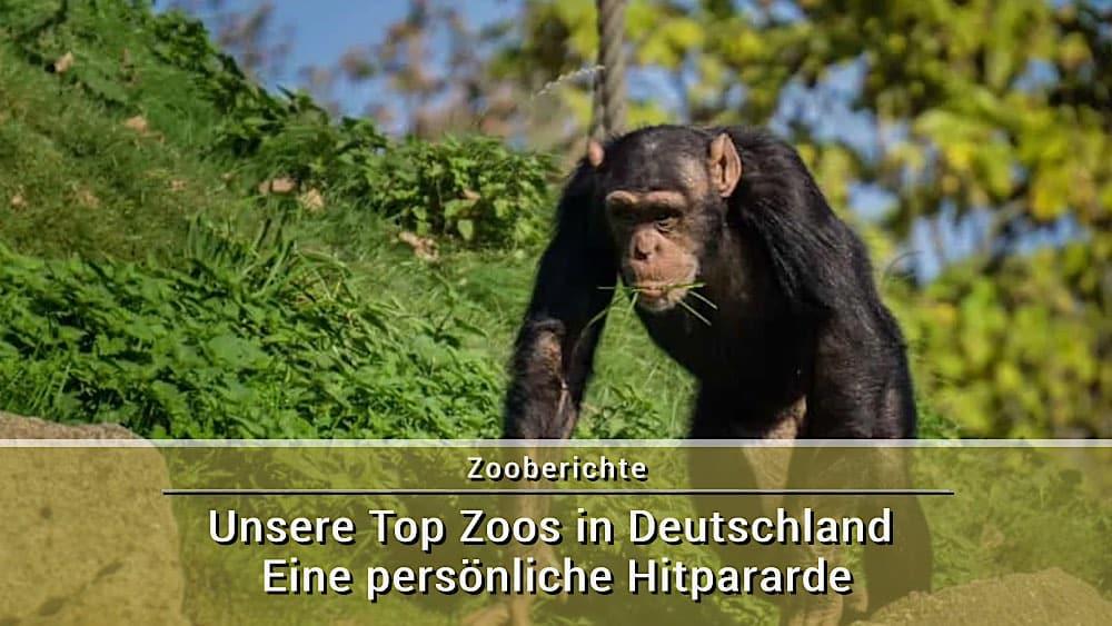 Unsere Top Zoos in Deutschland – eine persönliche Hitpararde