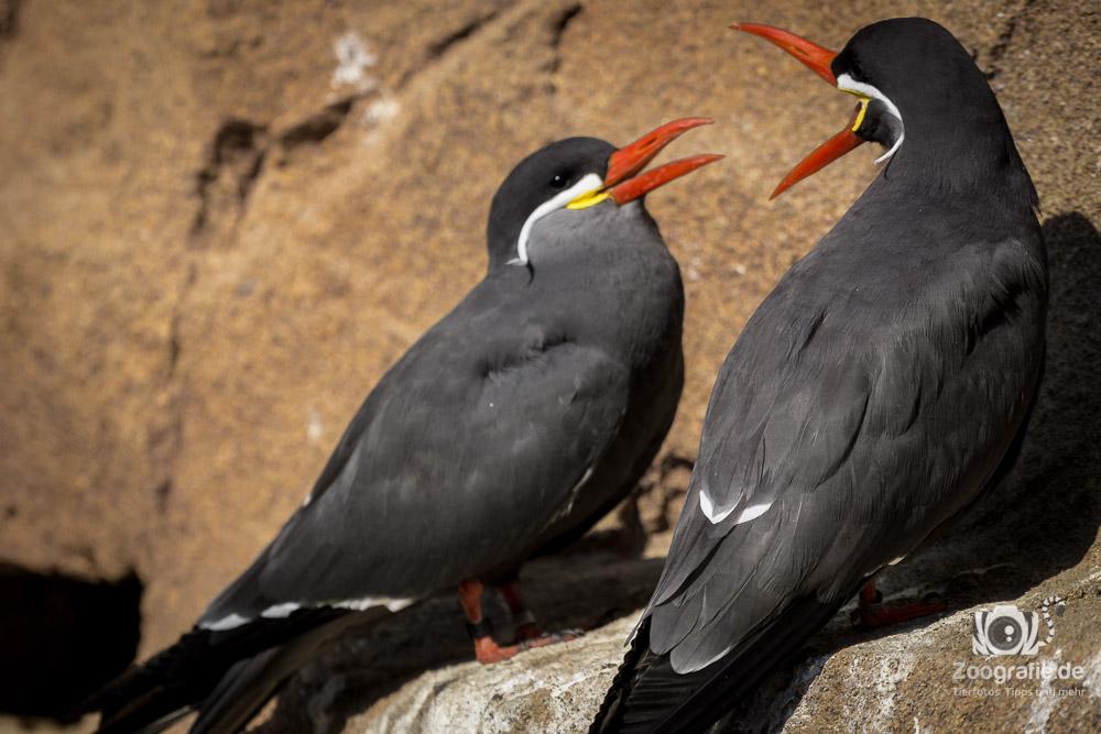 Schöne Vögel im Pinguin Gehege