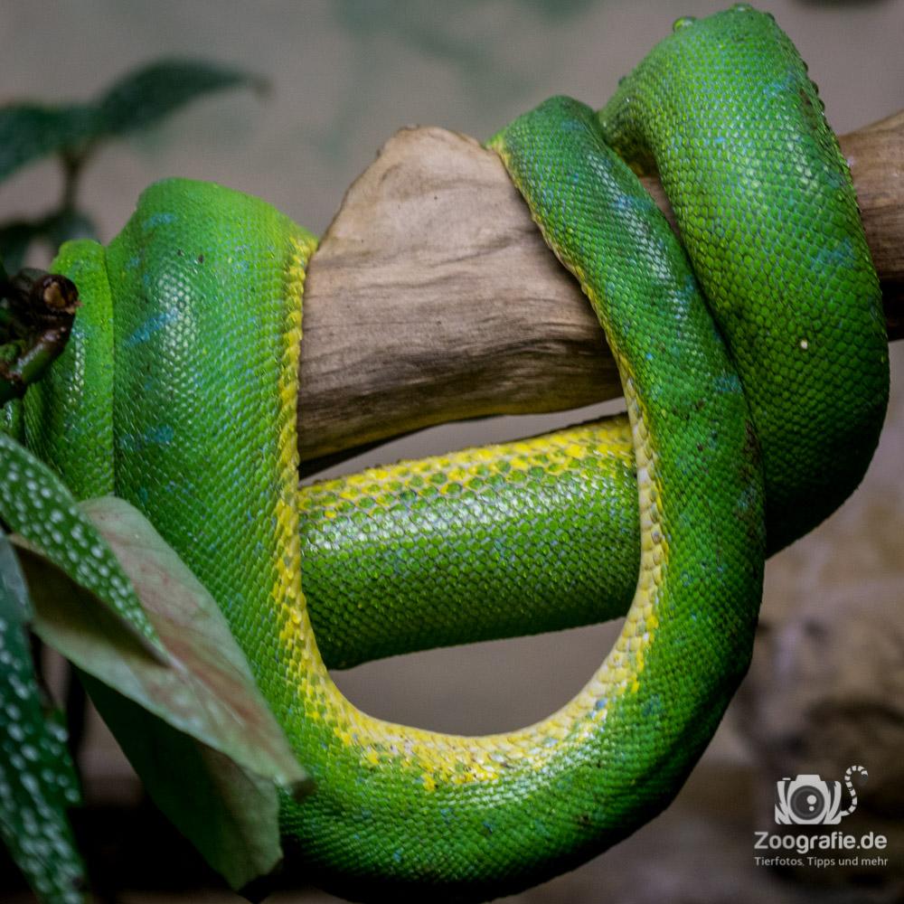 Schlange ohne Ende