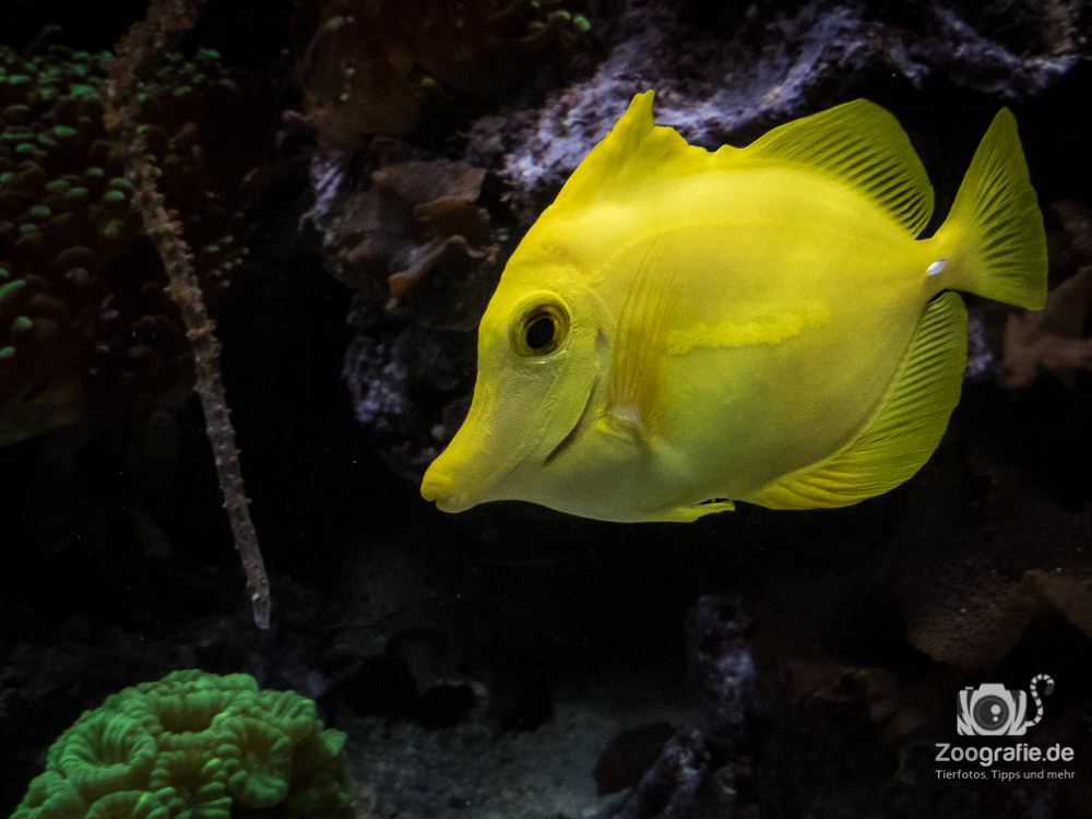 Zoo Münster - Aquarium
