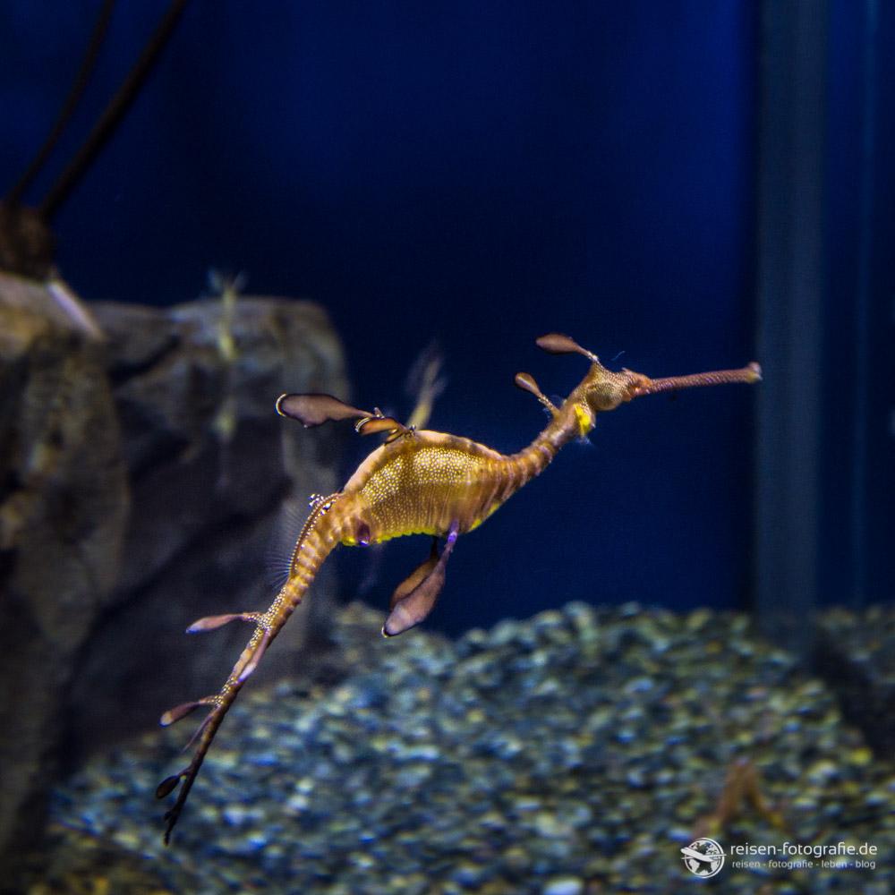 Bewohner im Atlanta Aquarium