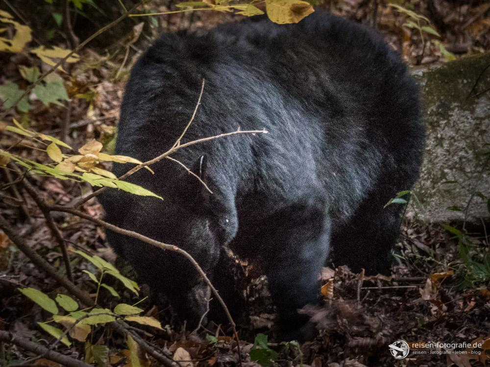 Verrauschte Bären mit ISO 1600