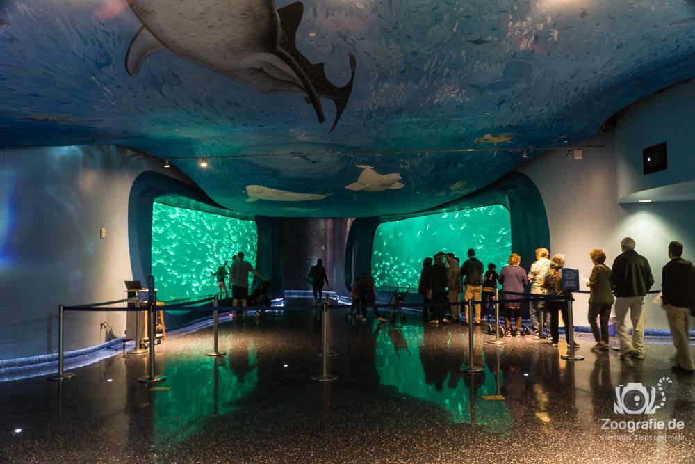 Einlass ins Aquarium