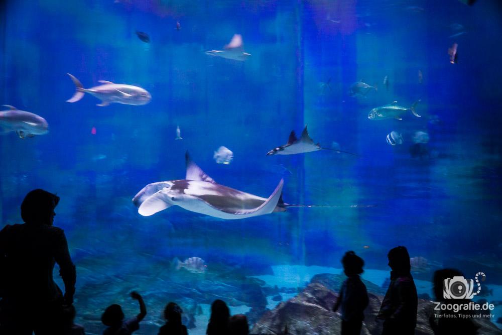 Nicht nur die Walhaie sind gigantisch