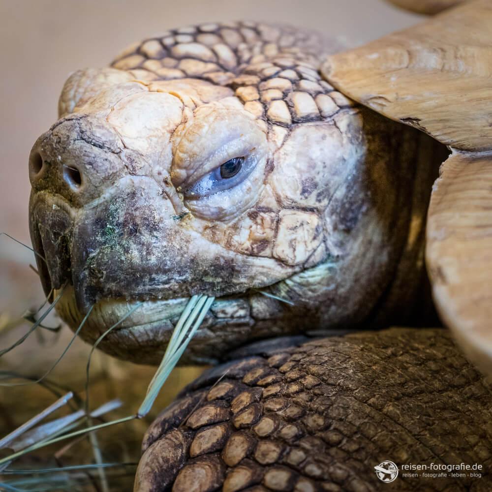 Fütterung der Schildkröten