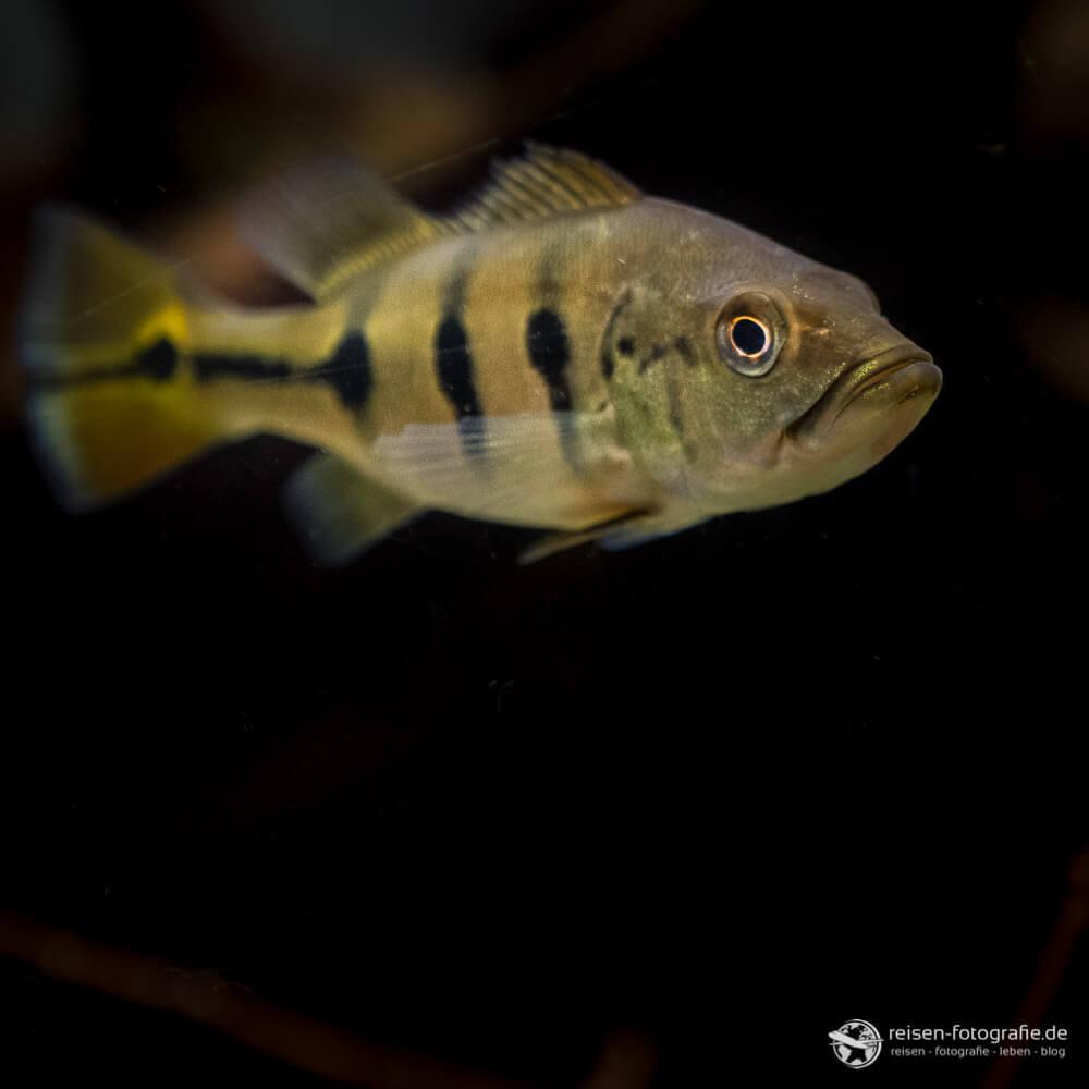 Fisch im Fosslium Bochum