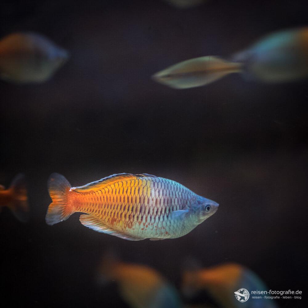 Fisch im Tiergarten Bochum