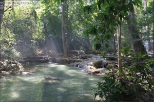 Fotobearbeitungs Challenge Regenwald