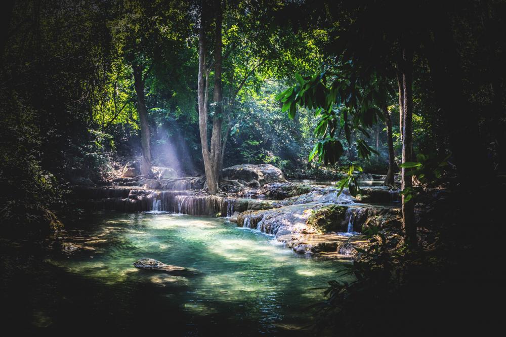 Regenwald von Marius P.