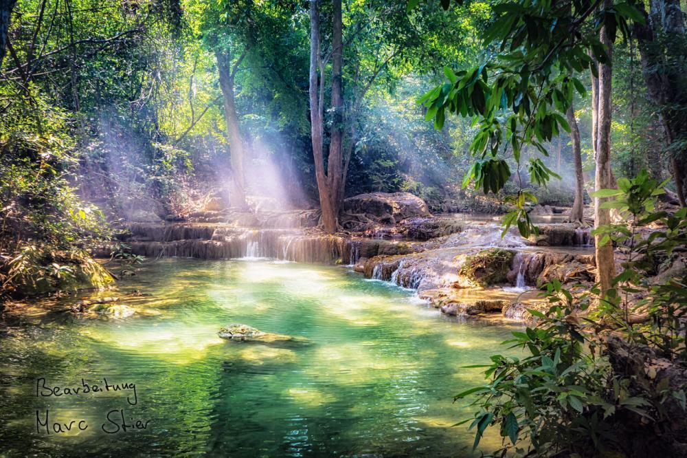 Regenwald von Marc S.