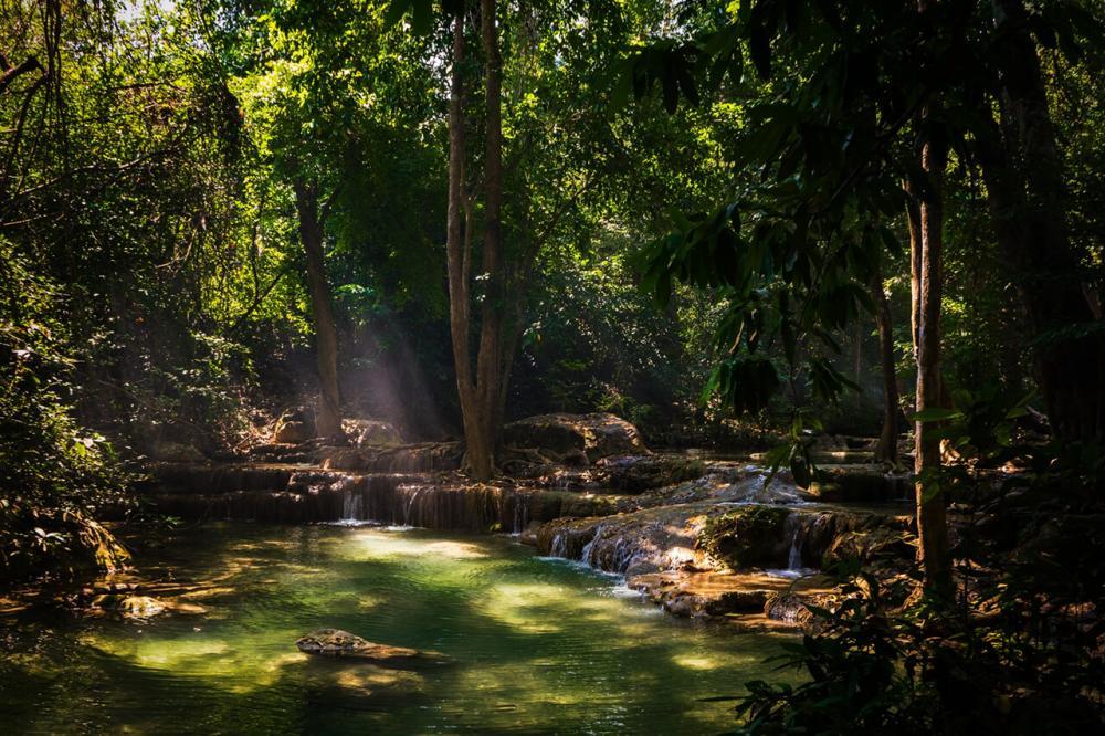 Regenwald von Andre B.