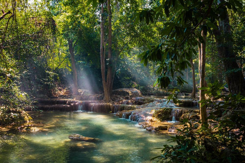 Regenwald von Moe