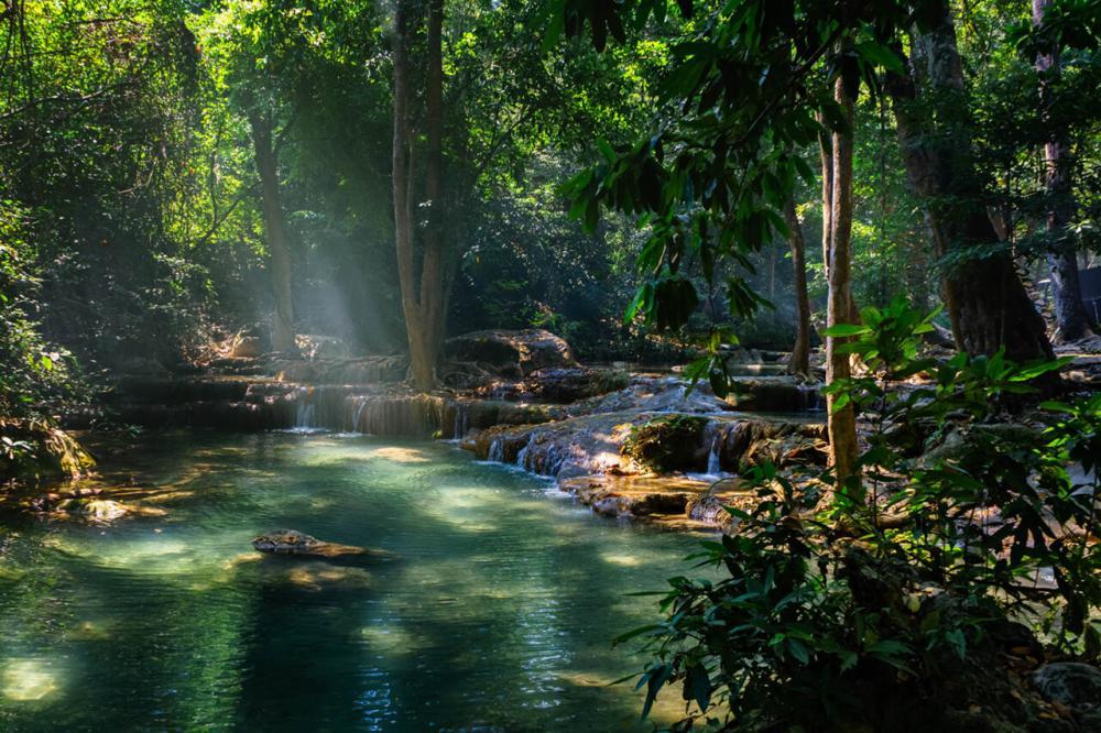 Regenwald von Marc A.