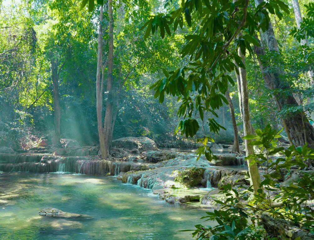 Regenwald von Christin F.