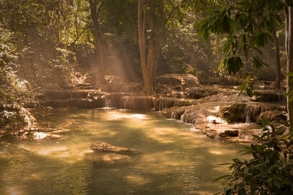 Regenwald von Michael M.