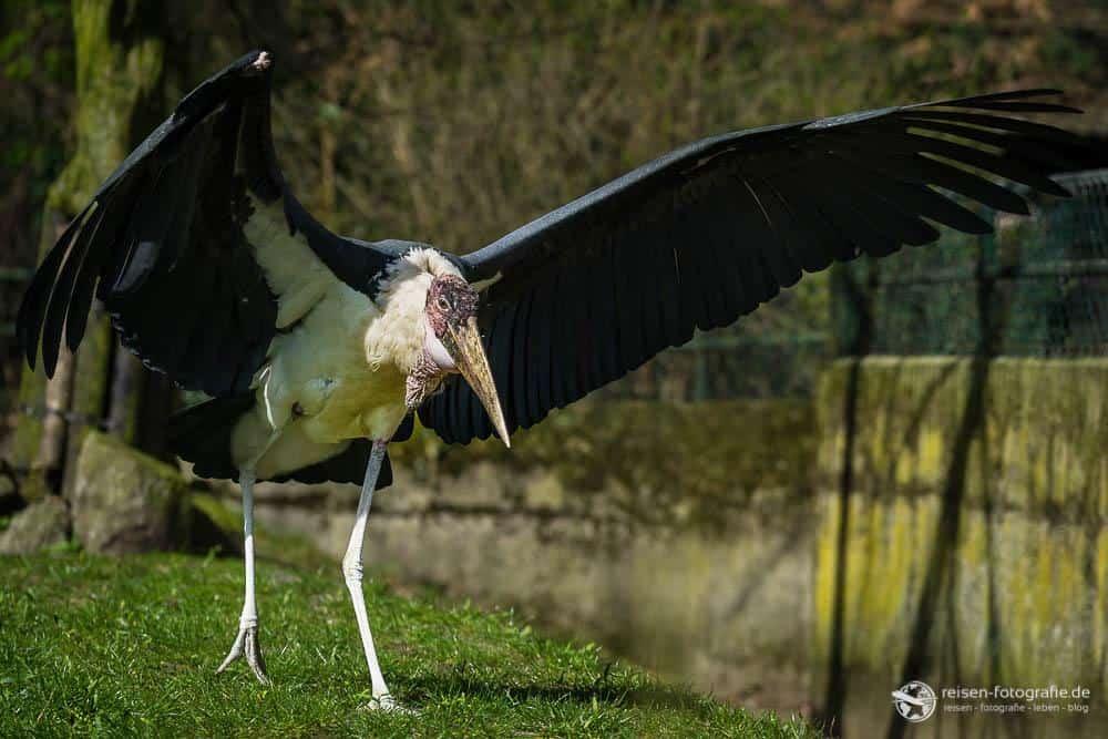 Zoo Duisburg - Vogel - hässlich