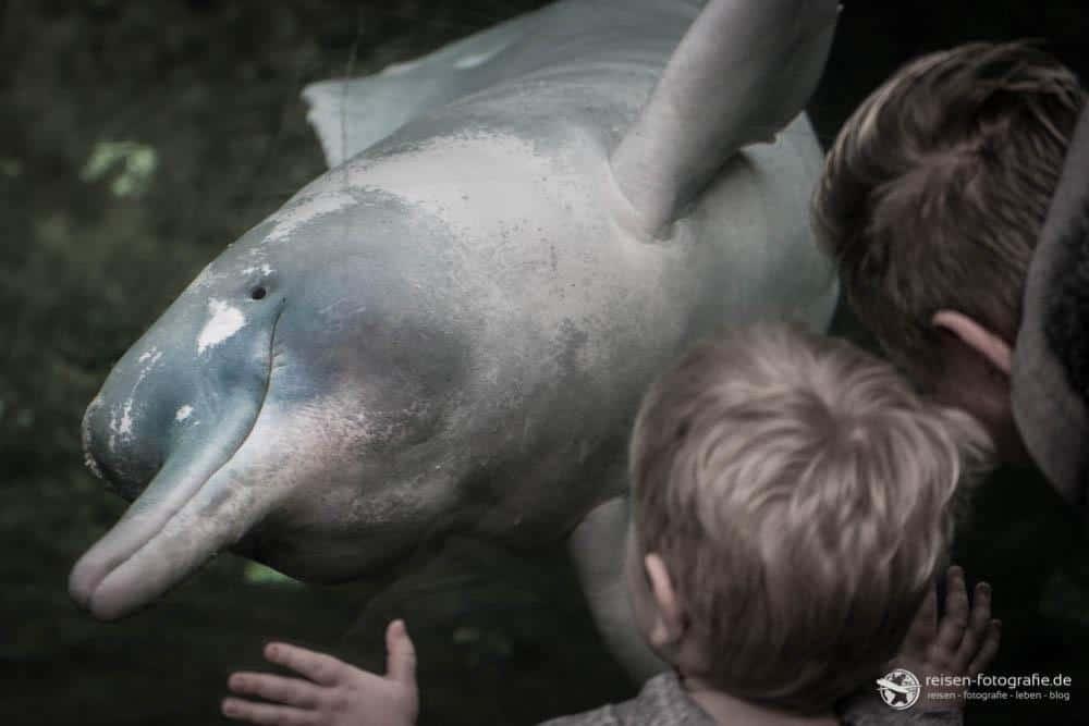 Zoo Duisburg - Flussdelphin