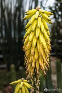 Botanik in der Wilhelma