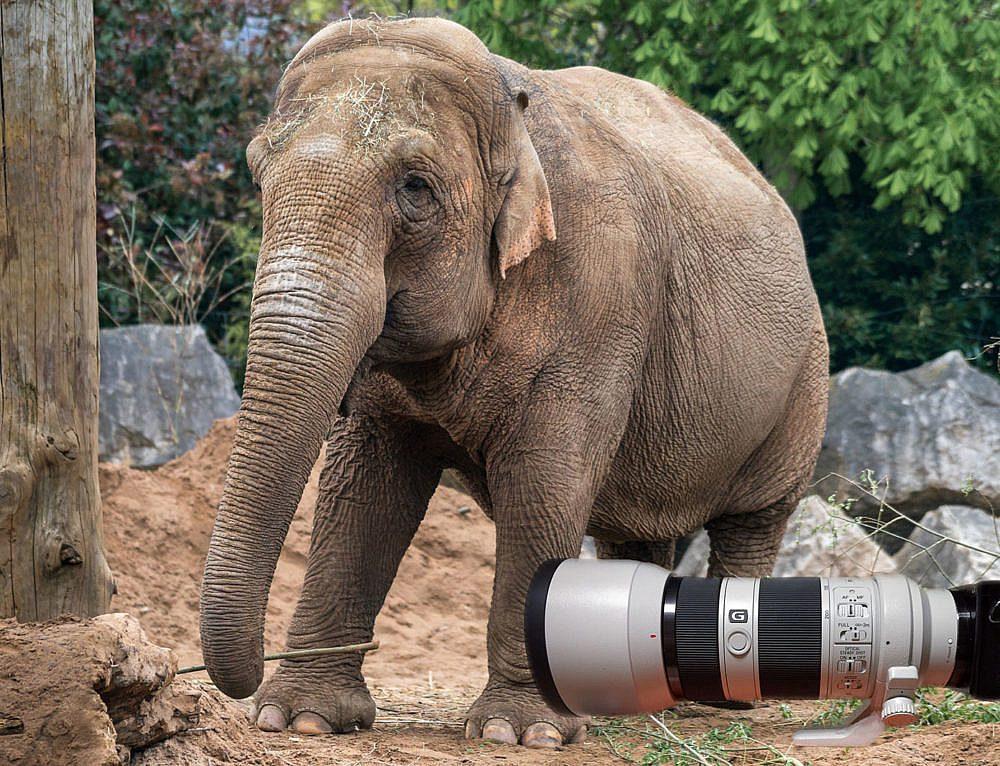 Unsere Fotoausrüstung für die Zoofotografie