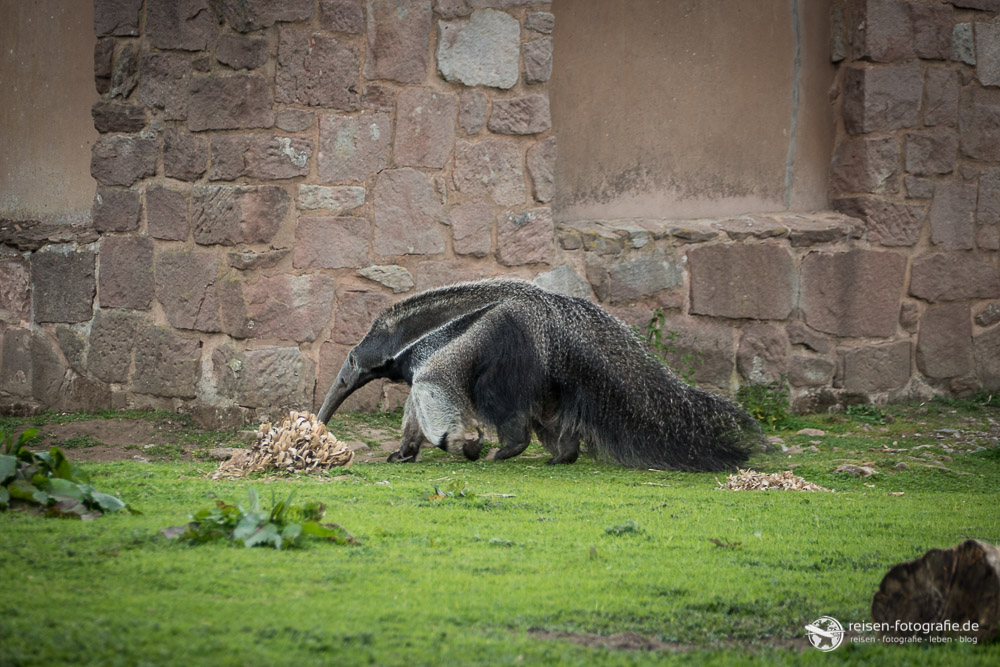 chester zoo - photo #10