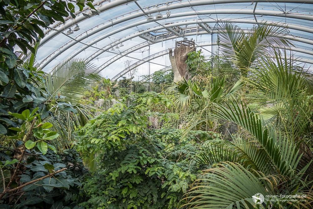 Tropenhaus im Chester Zoo