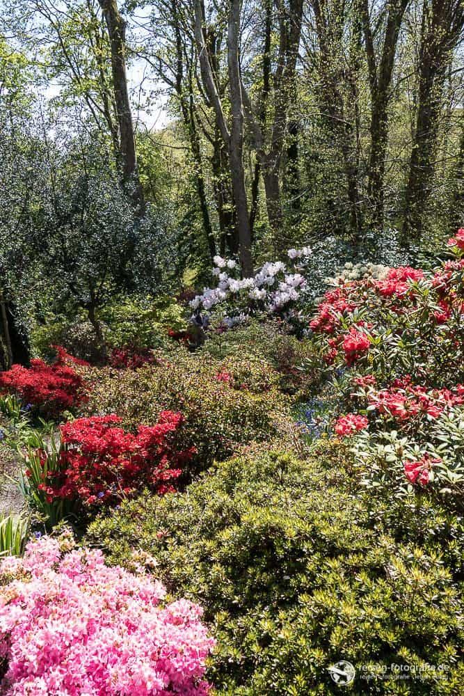 Plas Cadnent Hidden Gardens