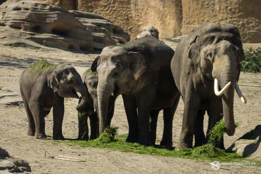 Familienidylle bei den Elefanten