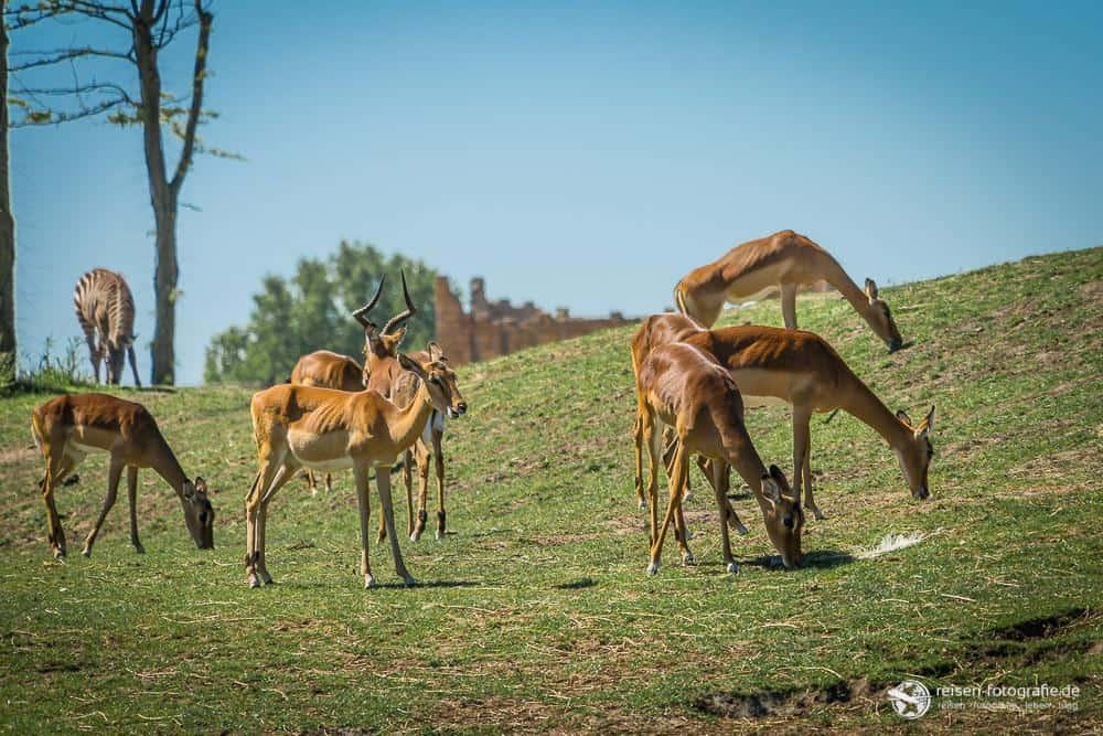 Serengeti Emmen