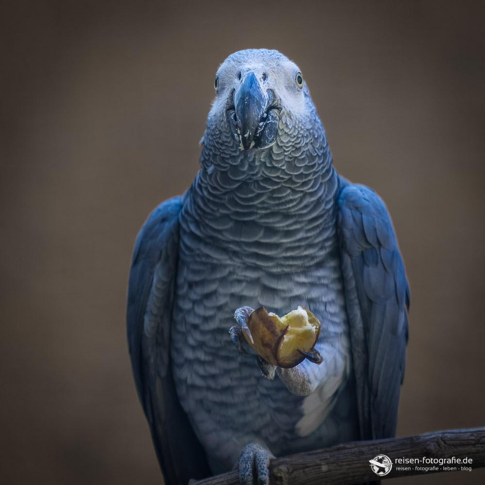 Papagei im Zoo Amneville