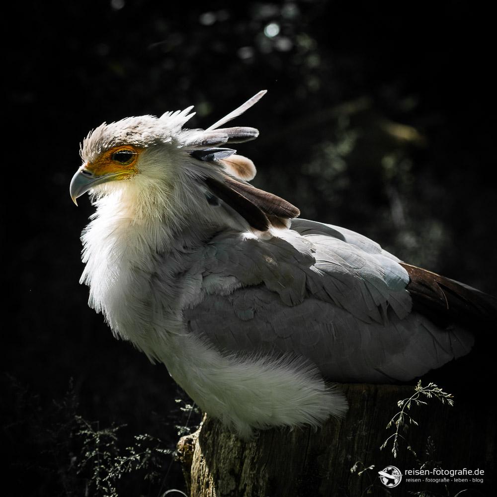 Vogel im Zoo Amneville