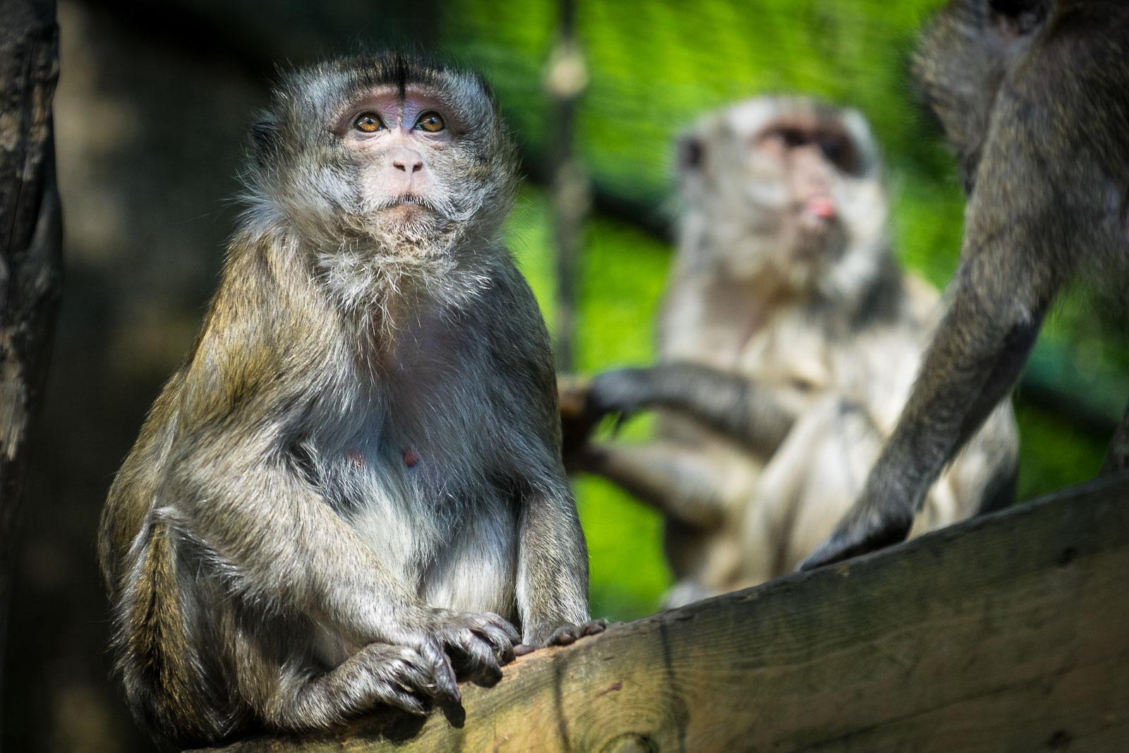 Zoo Amneville in Frankreich