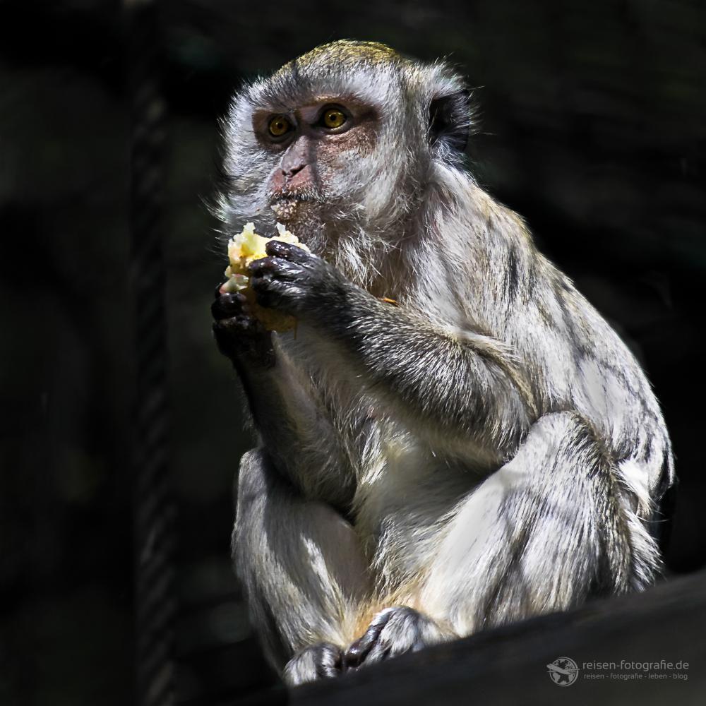 Affe Zoo Amneville