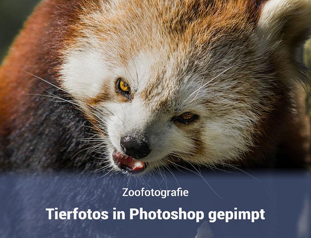 Tierfotos Photoshop – Bilderserie
