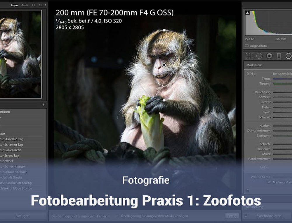 Fotobearbeitung in der Praxis: Teil 1 – Zoofotos bearbeiten