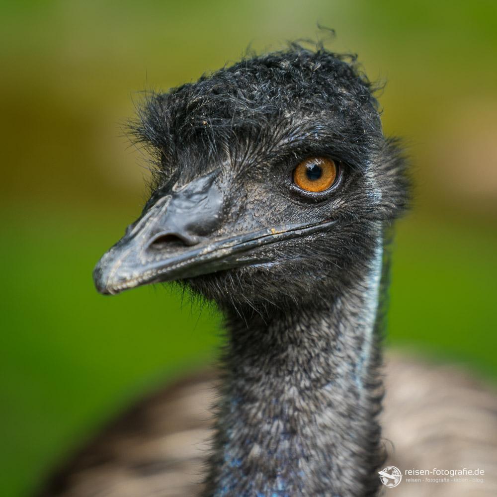 Emu-Portrait
