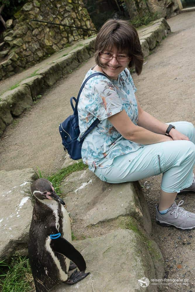 Nah dran an den Pinguinen