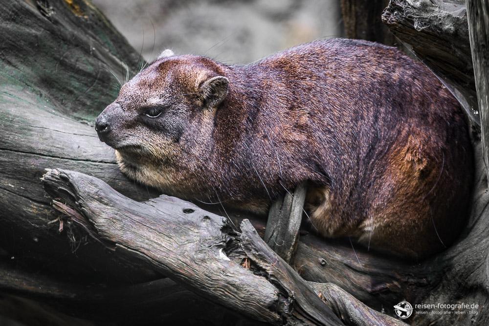Faulenzen im Zoo Osnabrück