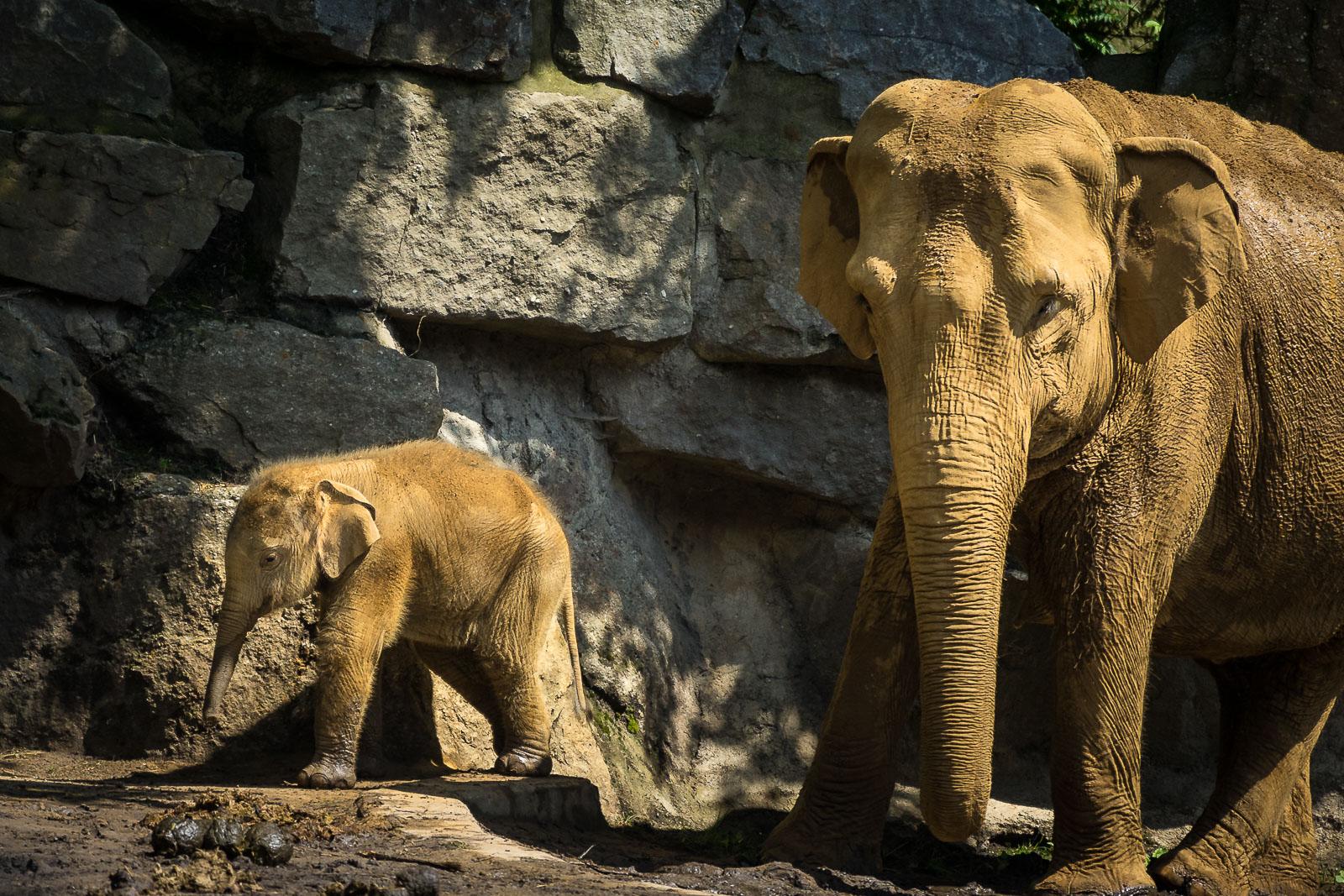 Zoo Osnabrück – Der Zoo mit toller Waldkulisse