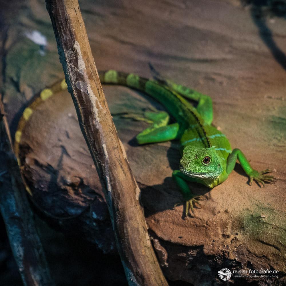 Kleiner Bewohner im Tropenparadies